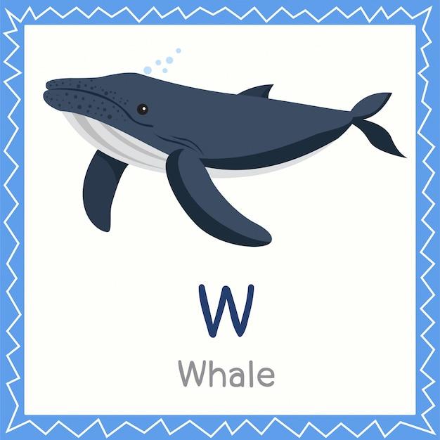 Ilustrator w dla zwierząt wielorybich