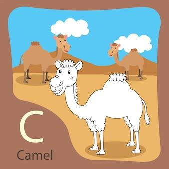 Ilustrator wielbłąda izolowanego i kolorowania