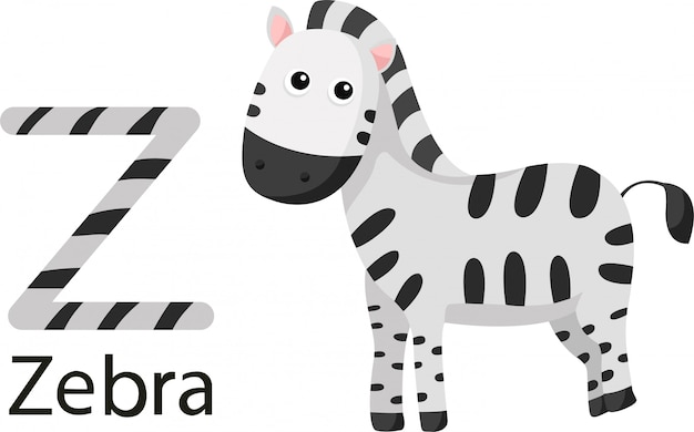 Ilustrator z zebrą