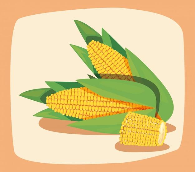 Ilustratorzy świeżych kukurydzianych warzyw