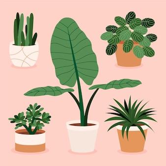 Ilustrowana kolekcja ręcznie rysowane roślin doniczkowych