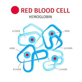 Infografika czerwonych krwinek