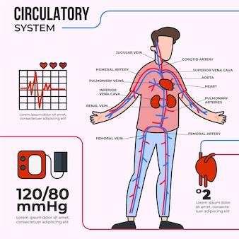 Infografika liniowego układu krążenia