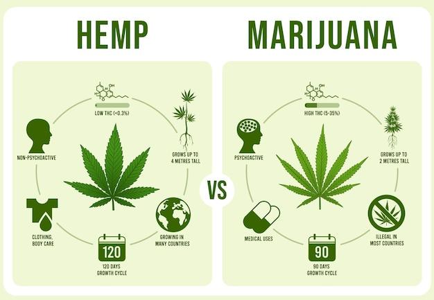 Infografiki konopie vs marihuana. liść konopi, ilustracja thc o niskiej i wysokiej zawartości.