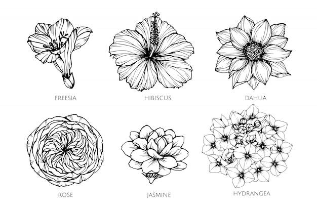 Inkasowy set kwiat rysunkowa ilustracja.