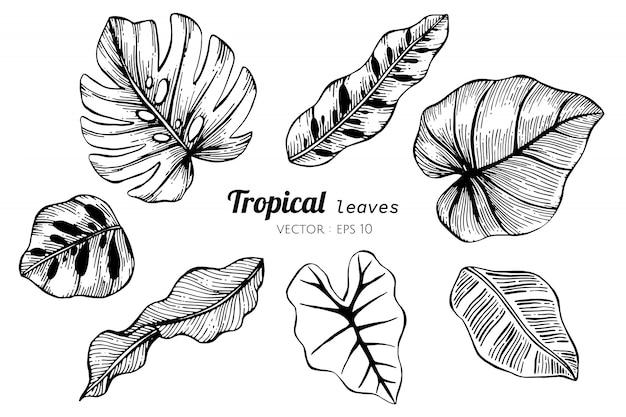 Inkasowy set tropikalni liście rysuje ilustrację.