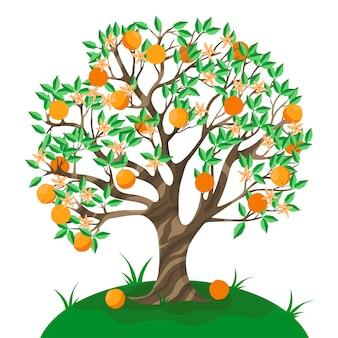 Izolat drzewa pomarańczowego