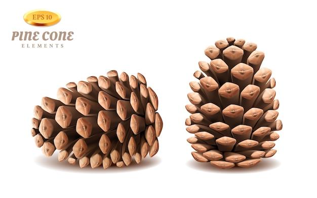 Izolowane 3d szyszki sosnowe lub realistyczny zimozielony strobilus. organ iglastej rośliny ozimej na nasiona.