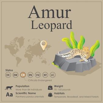 Izometryczny lampart amurski infografika