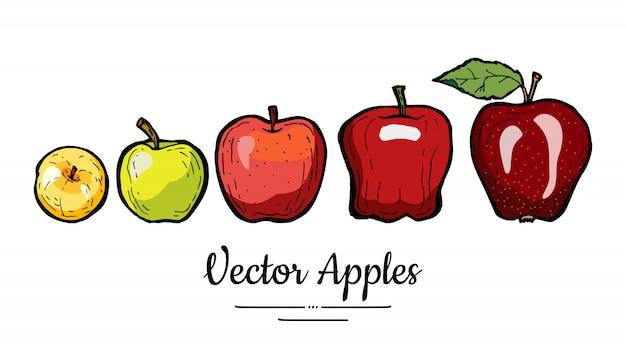 Jabłka wektor na białym tle. całe jabłka z liściem. żółta zielona czerwona ręka rysująca owoc ilustracja.