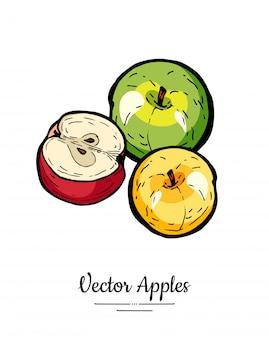 Jabłka wektor na białym tle. jabłka w całości pokrojone na pół. żółta zielona czerwona ręka rysująca owoc ilustracja.
