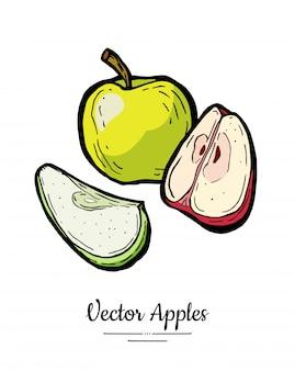 Jabłka wektor na białym tle zestaw. pokrojone jabłka w całości w ćwiartce. czerwona zielona owocowa ręka rysująca ilustracja.