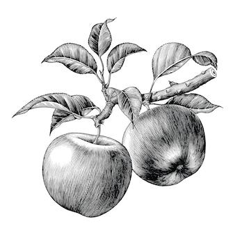 Jabłko gałąź ręcznie rysować rocznika na białym tle