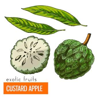 Jabłkowe custard. kolor ilustracji wektorowych.