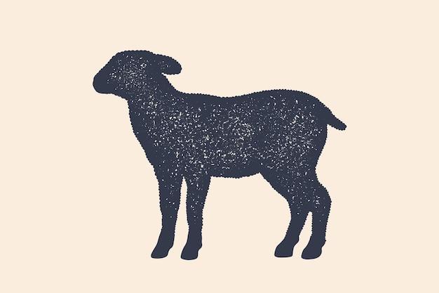 Jagnięcina, owca. koncepcja zwierząt gospodarskich - profil widok z boku baranka lub owca. czarna sylwetka baranka lub owiec na białym tle. vintage retro print, plakat, ikona. ilustracja