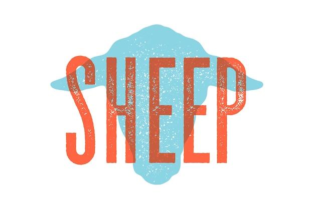 Jagnięcina, owca