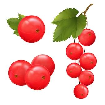 Jagody czerwonej porzeczki ilustracja wektorowa gałęzi porzeczki z zielonymi liśćmi na białym tle