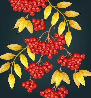 Jagody jarzębiny jesienią