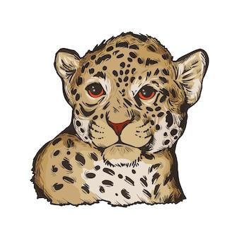 Jaguar dziecko, portret na białym tle szkicu egzotycznych zwierząt. ręcznie rysowane ilustracji.
