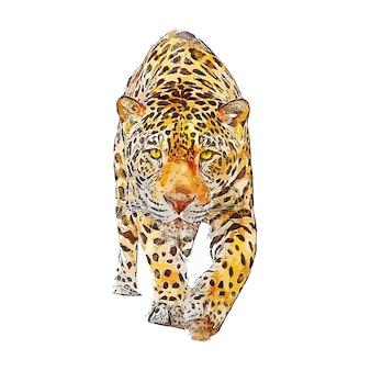 Jaguar zwierząt akwarela szkic ręcznie rysowane ilustracja na białym tle