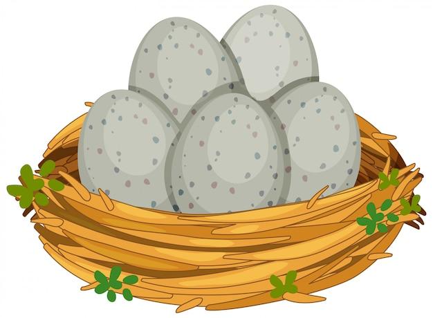 Jaja w gnieździe ptaka na białym tle