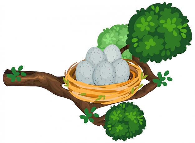 Jaja w gnieździe ptaka na gałęzi drzewa