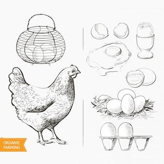 Jajka w koszyku