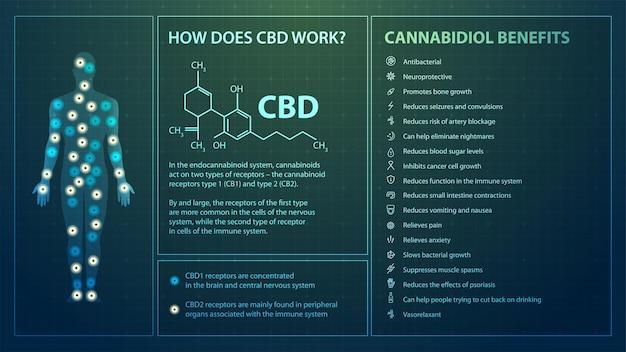 Jak działa cbd, plakat z infografiką, wzór chemiczny kannabidiolu i lista korzyści kannabidiolu