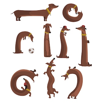 Jamnik pies zestaw, ładny zabawny długi pies w różnych sytuacjach ilustracje wektorowe