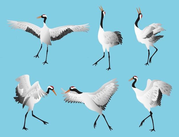 Japoński taniec koronowany żuraw w różnych pozach na białym tle