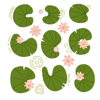 Japońskie lub chińskie kwiaty i lilypads zestaw kolekcja lotosu i liści wody różanej