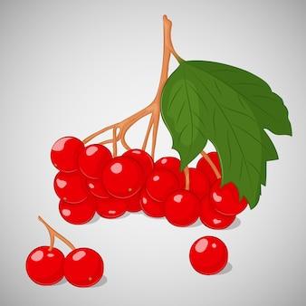 Jaskrawa soczysta guelder róża lub viburnum