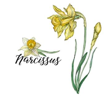 Jasne kwiatowe kompozycje wiosenne z kwiatami narcyza.