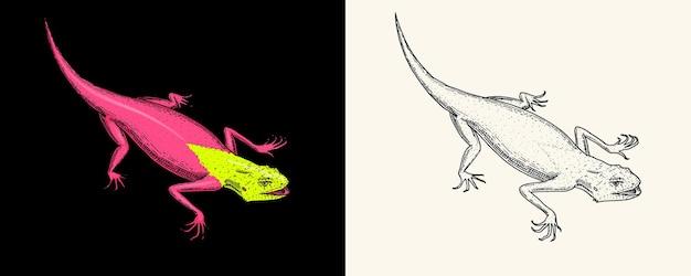 Jaszczurka lub gekon lub agama egzotyczne gady lub niebieskie węże czerwona góra synaj tęcza agama dzika