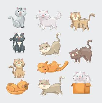Jedenaście uroczych kotów