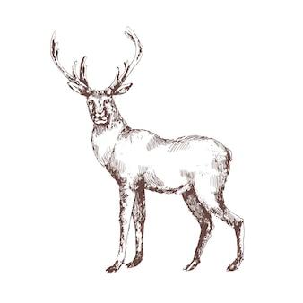 Jeleń ręcznie rysowane z liniami konturów na białym tle