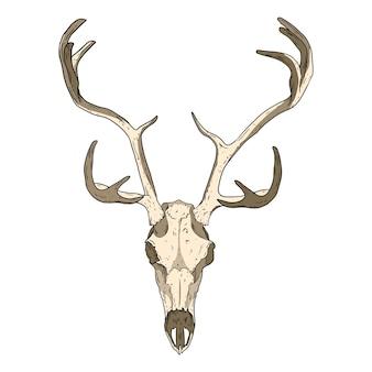 Jeleń skamieniałe czaszki ręcznie rysowane obrazu. rogate parzystokopytne kości zwierząt kopalnych ilustracja rysunek. wektor zarys zapasów sylwetka