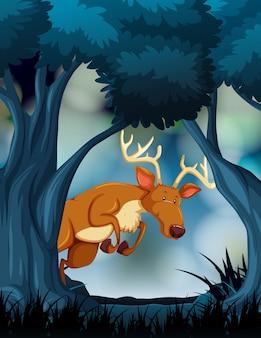 Jeleń w ciemnym lesie