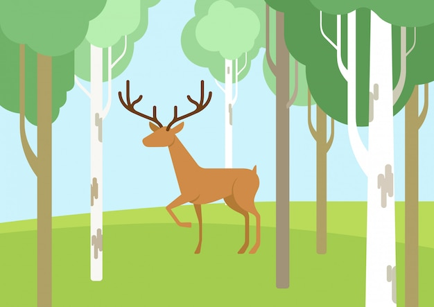 Jeleń w lesie brzozowym płaska konstrukcja kreskówka dzikich zwierząt.