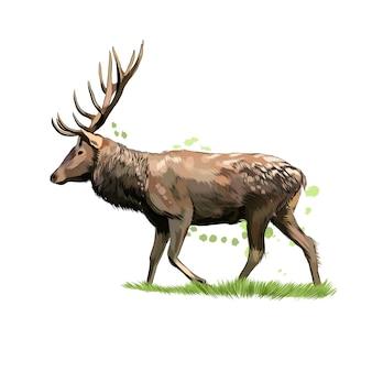 Jeleń z odrobiną akwareli, kolorowy rysunek, realistyczny. ilustracja wektorowa farb