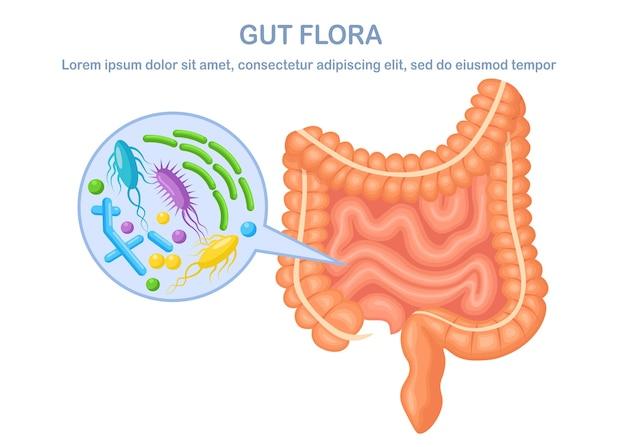 Jelita, flora wnętrzności na białym tle. przewód pokarmowy z bakteriami, wirusami. okrężnica, jelito.