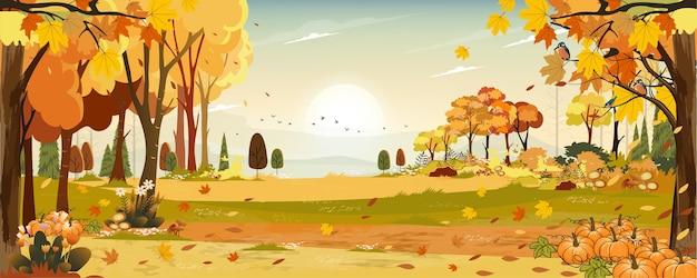 Jesień krajobraz kraina czarów las z trawiastą ziemią