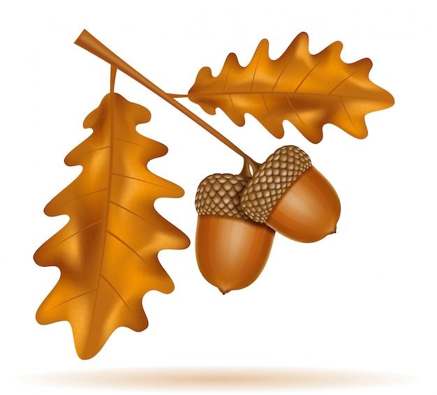 Jesień żołędzie dębowe z ilustracji wektorowych liści
