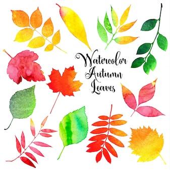 Jesienią liści akwarela