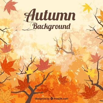 Jesienią tła z liści i brances