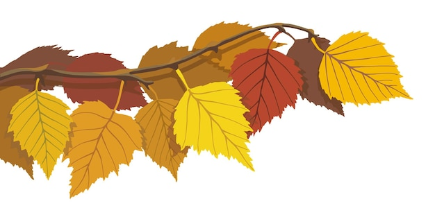 Jesienna gałąź brzozy na białym tle, ilustracji wektorowych