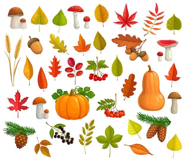 Jesienne ikony kreskówka spadające liście, dynia, grzyby, szyszki. klon, dąb lub topola i brzoza z liściem kasztanowca i jarzębiną. spadają sezonowe dojrzałe jagody, kłosy pszenicy i opadają liście.