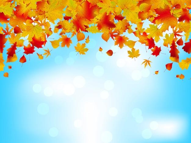 Jesienne liście na niebieskim niebie.