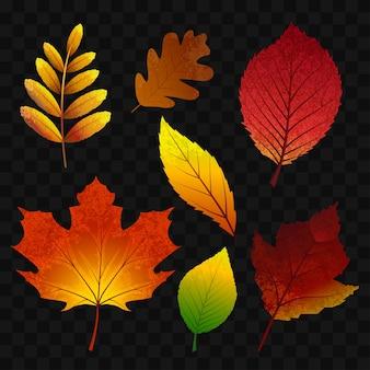 Jesienne liście - nowoczesne wektor realistyczne na białym tle clipart na przezroczystym tle. różne drzewa, dąb, jarzębina, klon, kasztan, brzoza, osika, aronia, wiąz