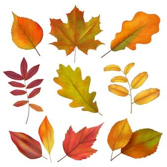 Jesienne liście. realistyczny żółty i czerwony liść jesienią. izoluje wektor zestaw